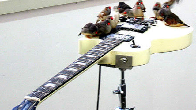 Pasari pe chitara
