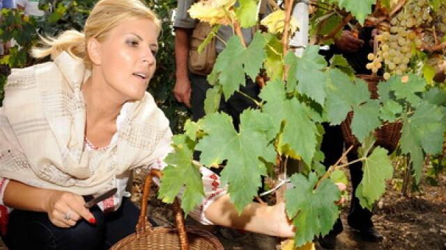 Ministrul Elena Udrea a fost la cules de struguri, imbracata in ie! FOTO - Imaginea 1