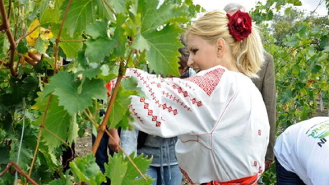 Ministrul Elena Udrea a fost la cules de struguri, imbracata in ie! FOTO - Imaginea 3