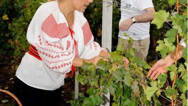 Ministrul Elena Udrea a fost la cules de struguri, imbracata in ie! FOTO - Imaginea 5