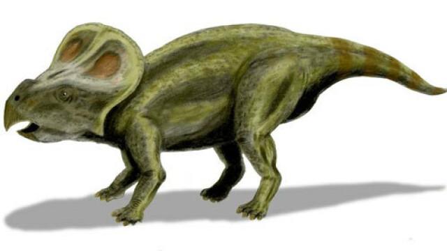 Descoperire unica despre dinozauri. Fotografiile pe care nu le-ai mai vazut pana acum. GALERIE FOTO - Imaginea 2