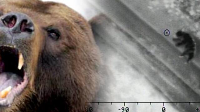 Barbat atacat de urs langa Petrosani. Fiara i-a smuls o buza si l-a ranit la brate