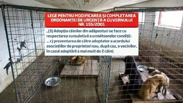 carton adoptie caini