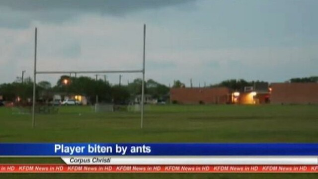 Un baiat de 13 ani a murit dupa ce a fost muscat de furnici pe terenul de fotbal