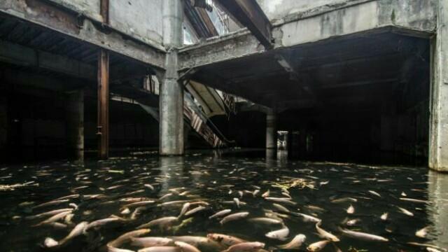 Un centru comercial abandonat de 17 ani ascunde un lucru extraordinar. Ce s-a descoperit sub el - Imaginea 5