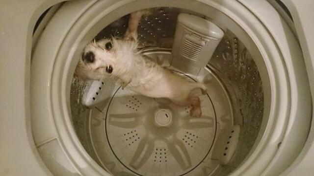 Un tanar si-a curatat cainele in masina de spalat rufe, iar imaginile au ajuns pe internet. Reactia iubitorilor de animale - Imaginea 3