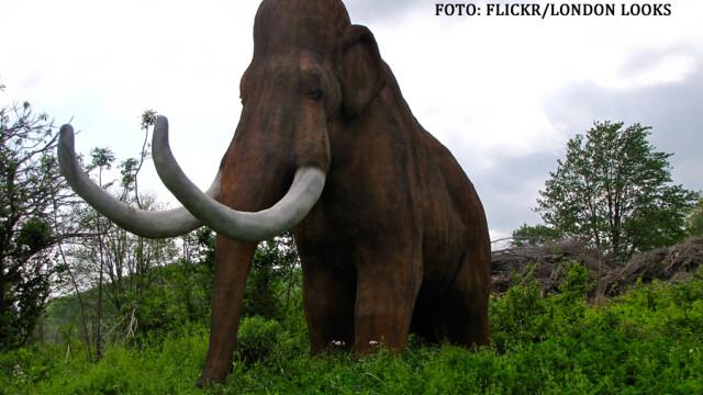 mamut de plastic intr-un parc