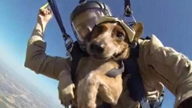 Testul curajului prin care a trecut un catel. Riley a sarit cu parasuta de la 4.000 de metri. VIDEO