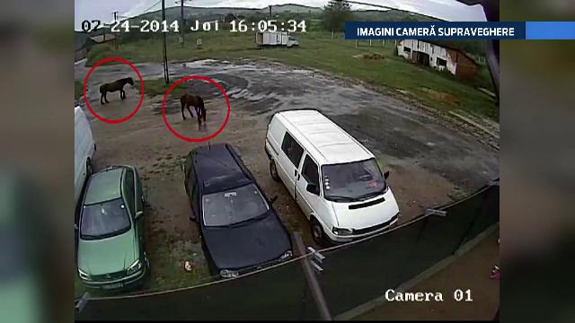 IMAGINI camera de supraveghere. Un sofer si fetita lui, la un pas de moarte din cauza unor cai uitati in mijlocul drumului - Imaginea 1