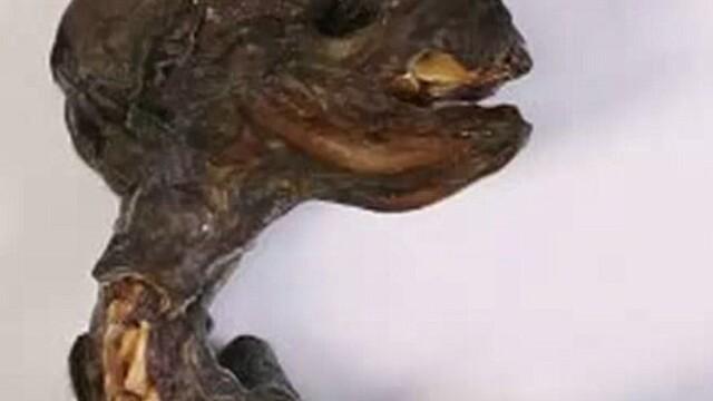 Trupul unei creaturi bizare a fost descoperit in Rusia, iar oamenii de stiinta nu reusesc sa spuna despre ce e vorba