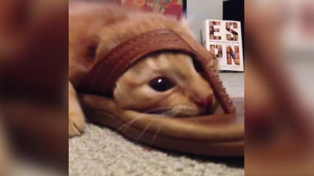 Cum isi omoara timpul cea mai plictisita pisica din lume. Mii de oameni s-au amuzat cand au vazut imaginile filmate