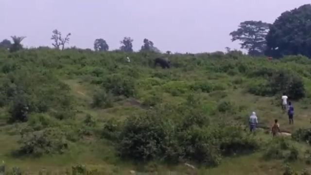 Momentul în care un bărbat e călcat în picioare de elefantul cu care a vrut să facă un selfie