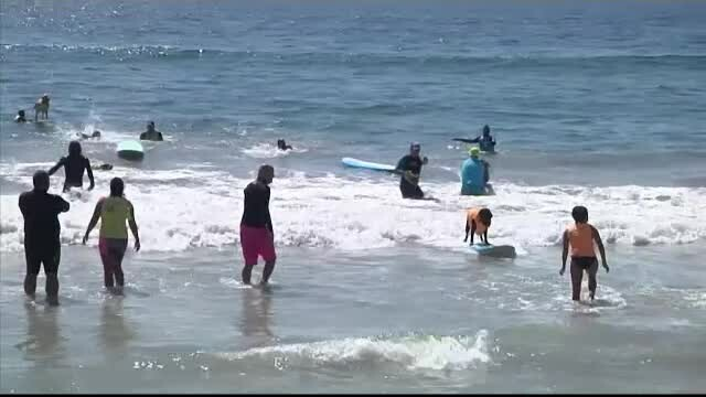 Caine surf