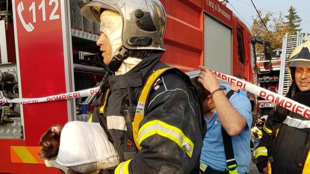 Pompierii au salvat mai mulți căței din blocul cuprins de flăcări în Capitală