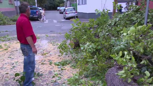 Copaci căzuți peste case și mașini în Oradea, după o rafală de vânt care a durat 10 minute