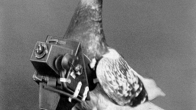 Documente declasificate. Cum folosea CIA porumbei pentru misiuni de spionaj în URSS - Imaginea 2