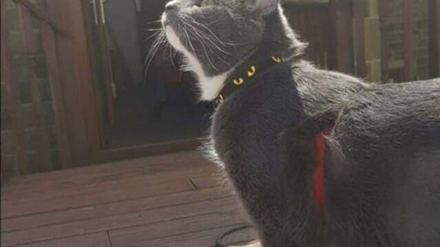 hot zgariat de pisica