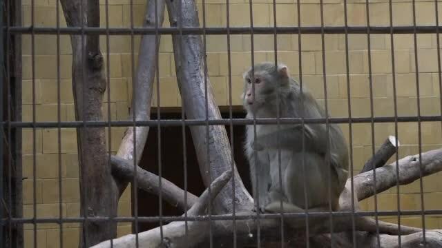Animalele exotice preluate de la Nuțu Cămătaru au ajuns la ZOO Târgu Mureș