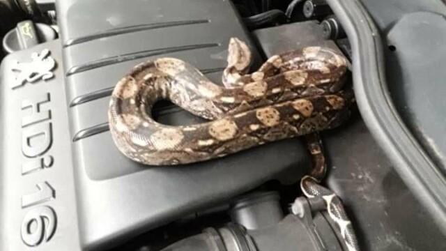 Descoperirea șocantă făcută de un mecanic din Franța sub capota unei mașini - Imaginea 2