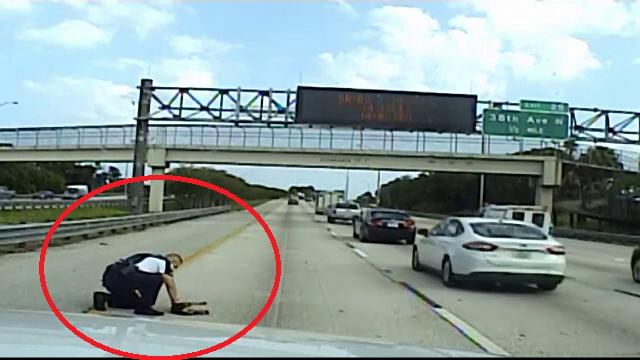 Cățel lovit de o mașină, salvat de un polițist. Cum l-a botezat