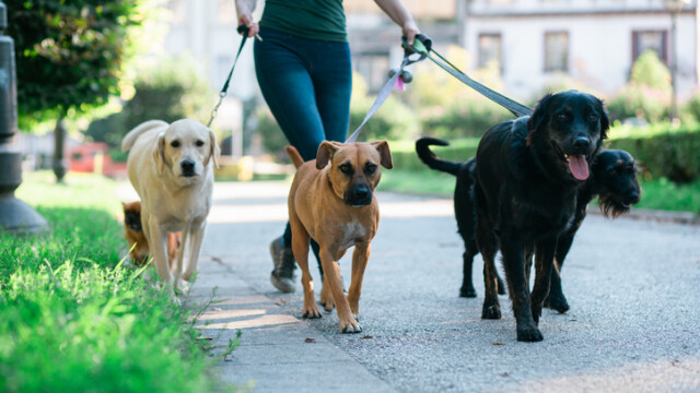 Amenda riscată de oamenii care nu își plimbă câinii în fiecare zi