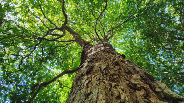 """Povestea incredibilă unei femei care s-a căsătorit cu un copac: """"Suntem mai fericiți ca niciodată, nu divorțăm"""""""
