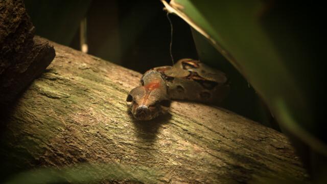 O femeie s-a trezit mușcată de șarpe, în somn. Se agățase de sprânceana ei