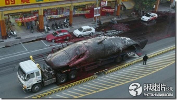 balena Taiwan