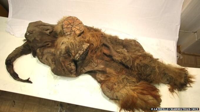 pui de mamut mumificat