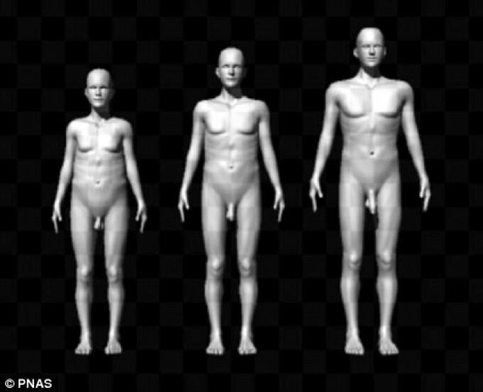 testicule căzute în timpul unei erecții erecția cade din cauza excitării