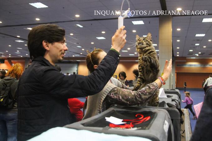 Expozitia de animale de companie, Bucharest Pet Exhibition, organizata la Romexpo, in Bucuresti, sambata, 11 martie 2017