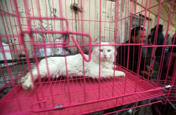 pisica in magazin pet shop