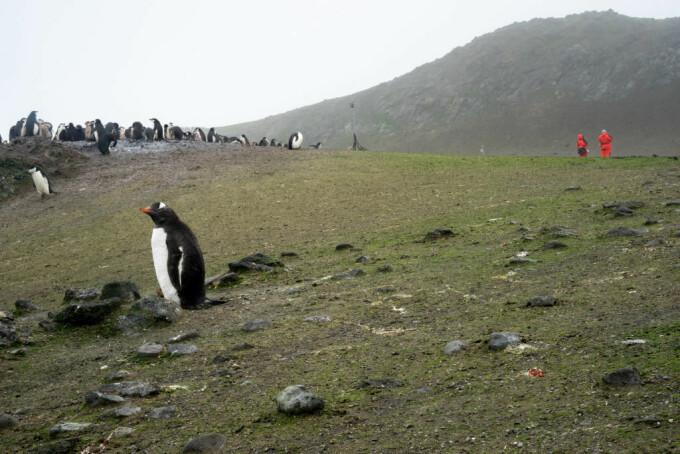 Antarctica ar putea fi verde din nou - 2