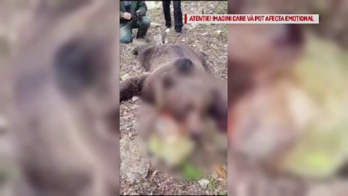 Gospodărie din Colți, Buzău, atacată de urs, după ce un alt animal a fost ucis
