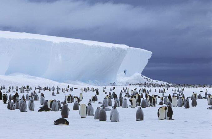 pinguini imperiali