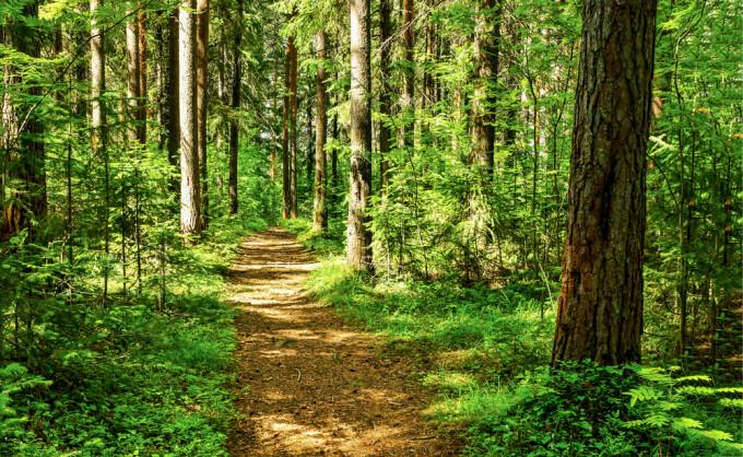 Pădure