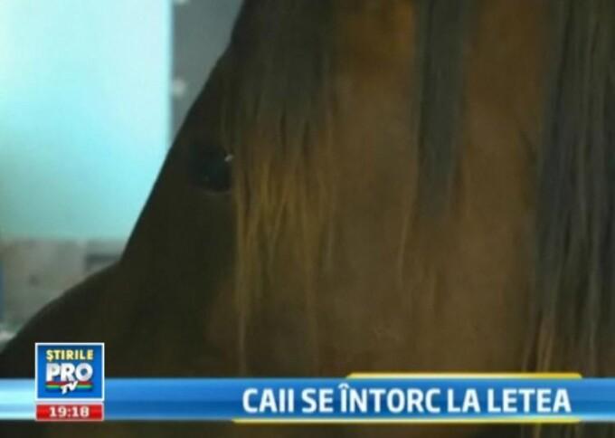 Cai Letea