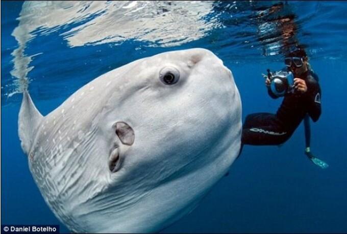 Peste Mola