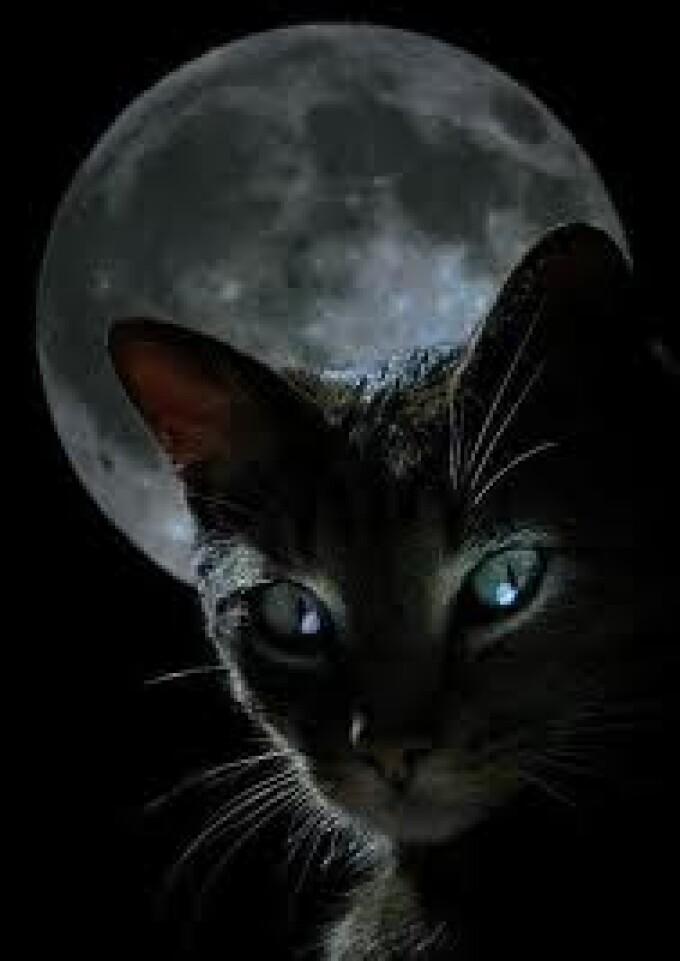 pisica, luna