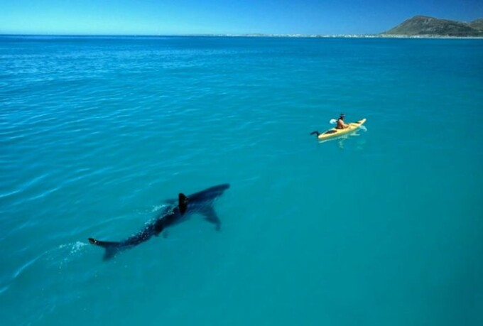 rechin turist