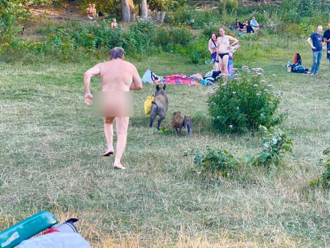 Un bărbat complet dezbrăcat aleargă după un mistreț, prin pădure - 1
