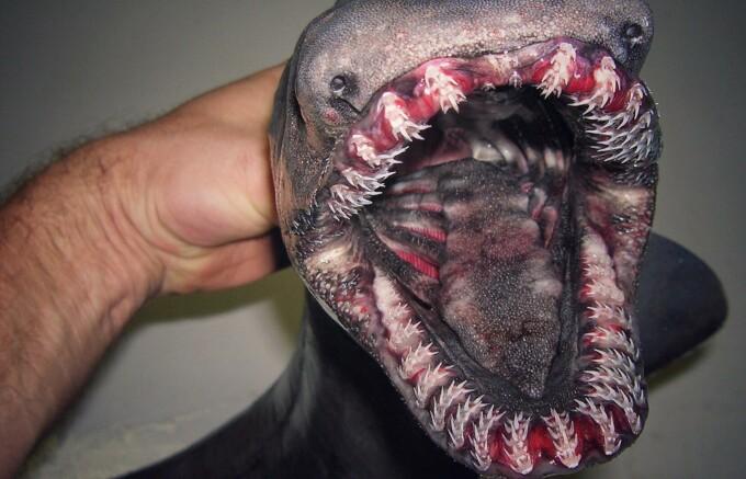 creatura marina