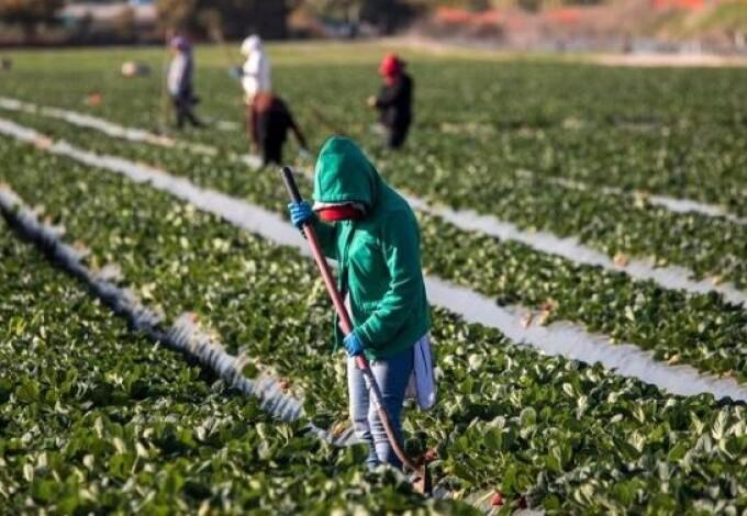 Muncitori agricultura, migranti