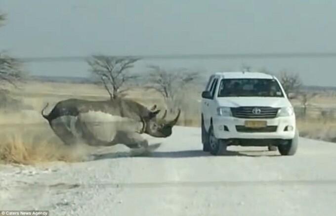 rinocer safari