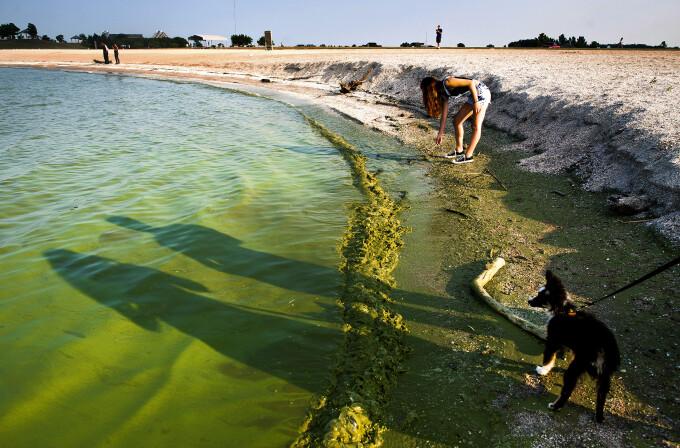 Poluare Lacul Erie