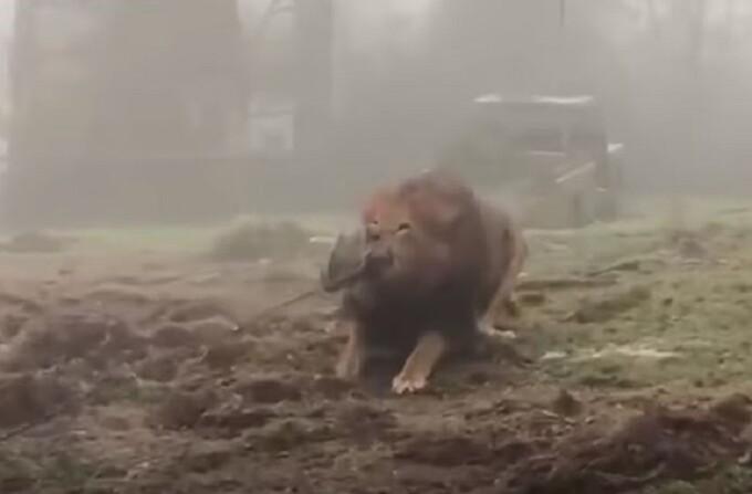 leu gradina zoo