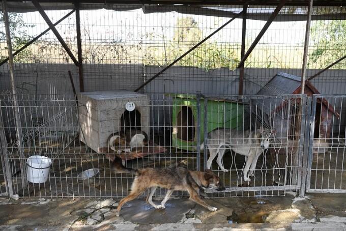 adăpost pentru câini