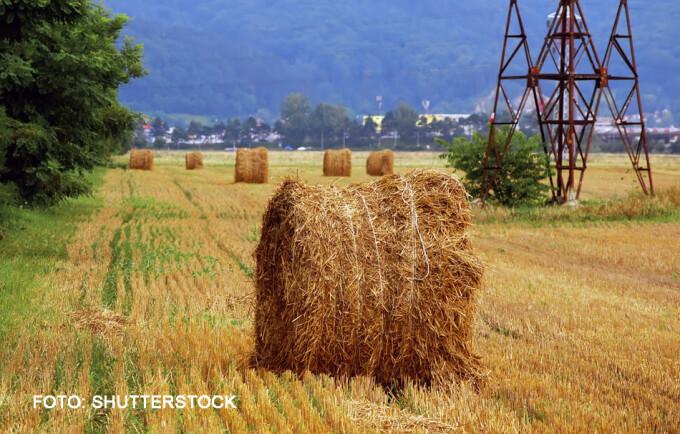 agricultura Romania capita de fan