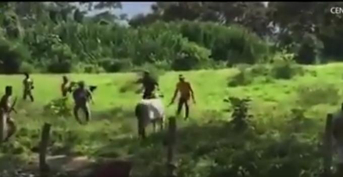 Vaca ucisa in Venezuela