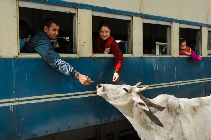 Vaca, tren